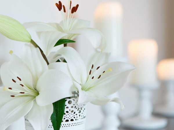 Bereavement Clearance Services